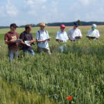 Wheat field trials (FiBL)