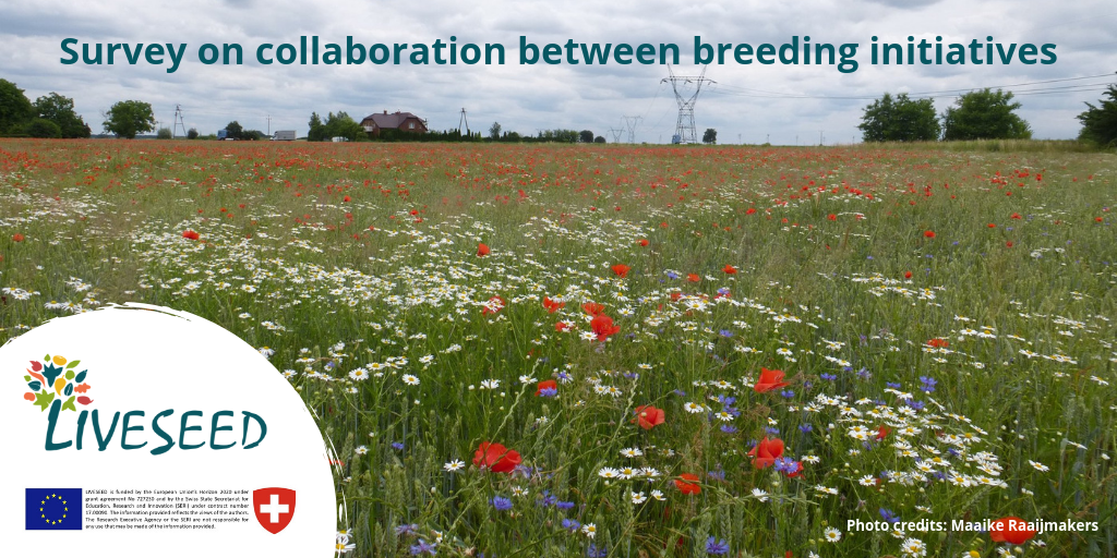 liveseed, breeding, initiatives, organic, survey, field, wheat, poppies